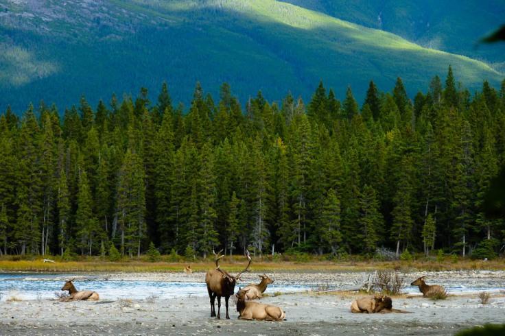 elks outside jasper