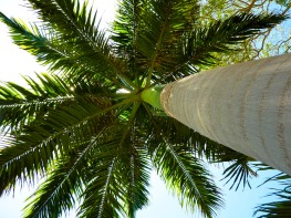 Endless palm trees