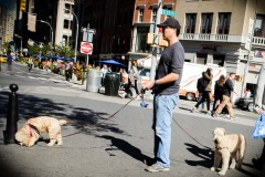 More New York dogs